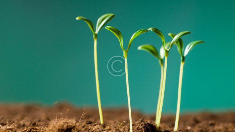 bigstock-Green-seedling-illustrating-co-14319230.jpg